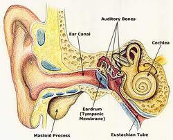 Cara Mengobati Infeksi Telinga Secara Tradisional