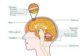 Pengobatan Alternatif Tumor Otak